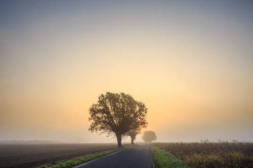 morning sunrise canon lens landscape eos ngc poland willow l greater 1740 uwa 17404l