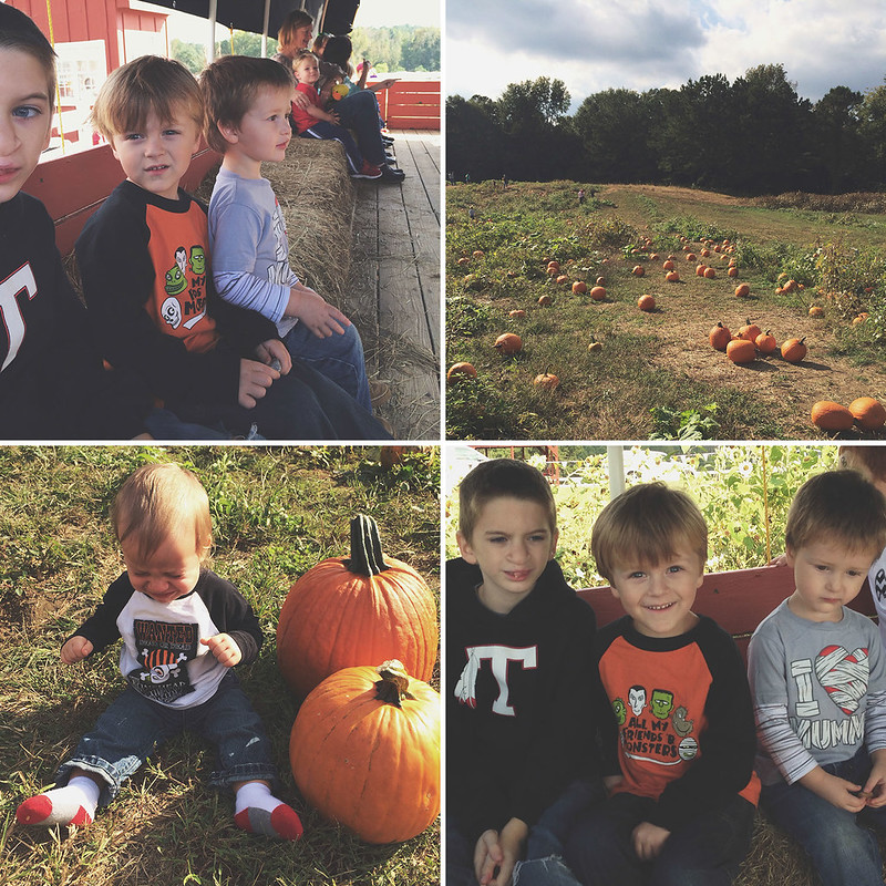 PumpkinPatch_13