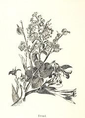 Image taken from page 52 of 'Lose Blätter aus Abazia. Mit 32 Illustrationen. [By Louis Salvator, Archduke of Austria.]'