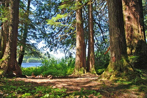 Nahwitti River Trail to Nahwitti Lake near Port Hardy, North Vancouver Island, British Columbia