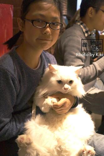 cat_5th (34)