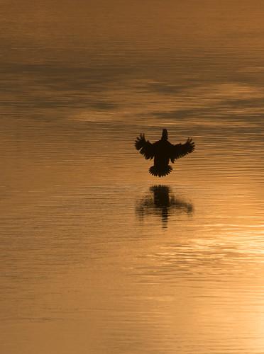 ocean water birds reflections landscape outdoors seaside nikon wildlife northcarolina waterfowl seashore calabashnc d800e easterncarolinas richstrobel