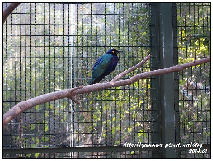 森林鳥花園56