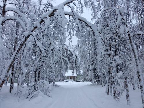 trees winter snow finland lapland snowfall finnishlapland harriniva