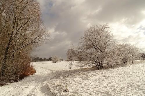 road trees winter sky white snow nature clouds landscape view path poland polska lodzkie jeziorsko łódzkie