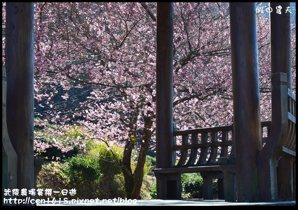 武陵農場賞櫻一日遊DSC_5580