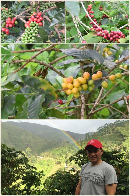 Coffee on the farm La Esperanza