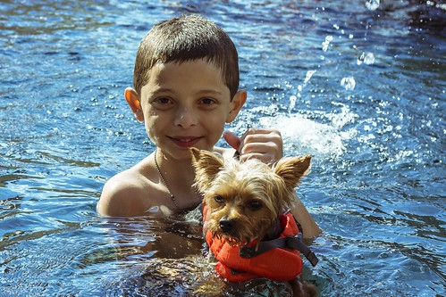 Dog and boy swimming in a pool. Make sure you are covered by liability insurance.