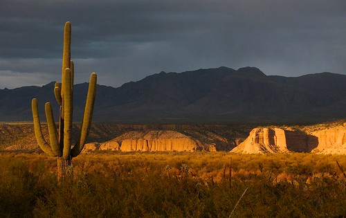 arizona usa mountains cacti landscapes flickr desert unitedstatesofamerica gps 2014 pinalcounty sanpedrorivervalley saguarocactuscarnegieagigantea