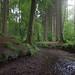 Im Wald (2)