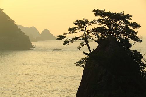 morning sea tree landscape coast 日本 tokushima 海 hiwasa 太平洋 朝 oohama 徳島県 日和佐 大浜海岸 美波町 minamitown