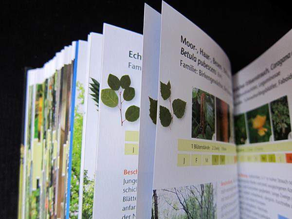 Bäume bestimmen - Buchverlosung