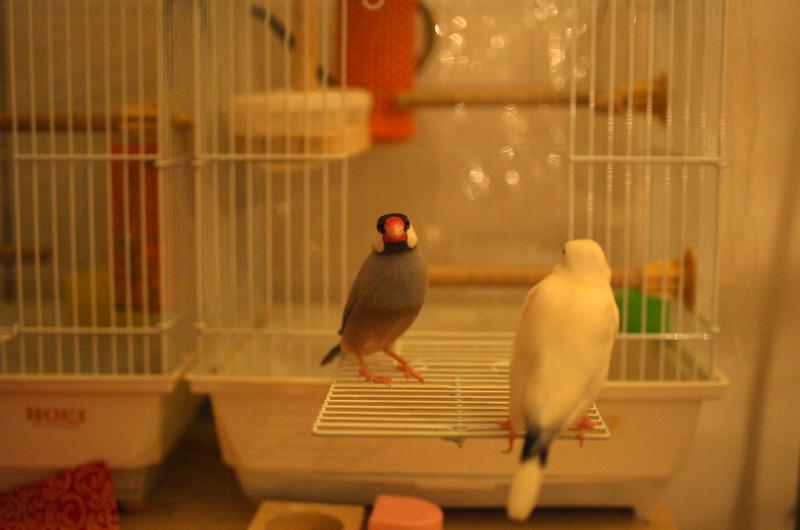 Hampem & Peruhi