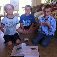 @ApologiaWorld Swimming Creatures-learning about Herps #homeschool #hsbloggers