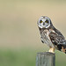 early morning shortie by brodmann's 17