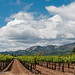 Kunde Vines and Clouds by dschultz742