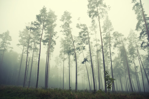 morning mist fog forest landscape lithuania lietuva