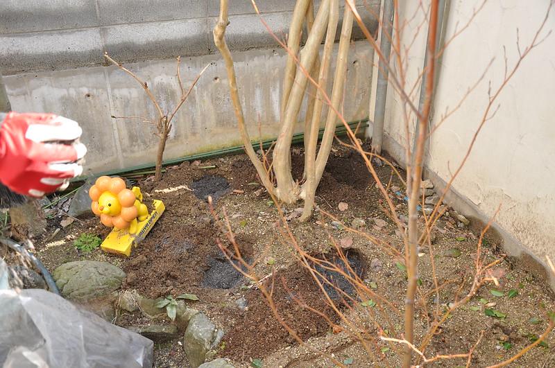 庭木に肥料をやる手順2.肥料を穴に入れる
