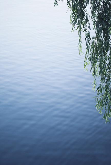 A pond (Explore #17, 18.09.2013)