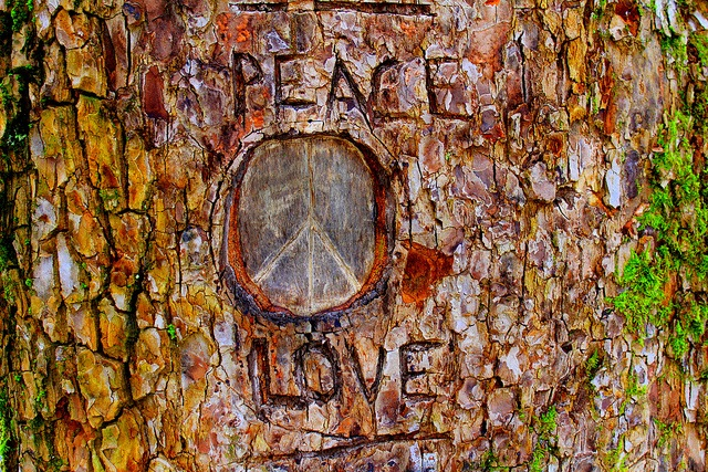 Tree graffiti in the park.