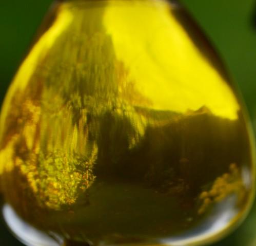 Back Garden Through Olive Oil