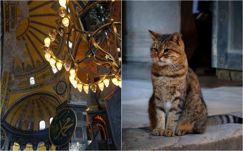 Stray-Cats-Istanbul-(3)