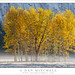 Autumn Cottonwood Trees, Meadow, Fog by G Dan Mitchell