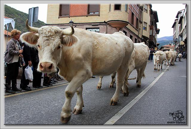3 Feria de ganado en Potes 2013