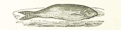 Image taken from page 182 of '[The Handbook to the Rivers and Broads of Norfolk & Suffolk. [With illustrations and a map.]]'