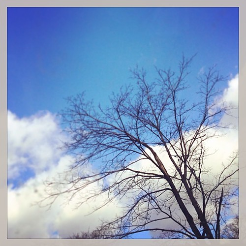 Blue skies & bare branches