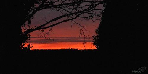 dawn backgarden redsky shepherdswarning redskyinthemorning