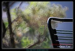 CanonFD500-8352
