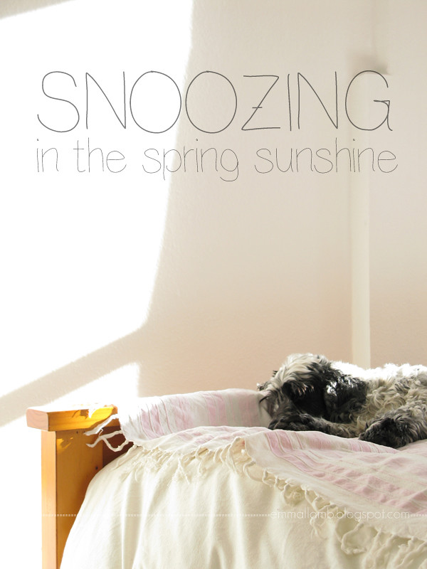 My wee man Spanner in his favourite spot for snoozing, spring sunshine or not! | Emma Lamb
