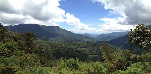 peru peruvianandes peruviancloudforest altomayowildlifereserve