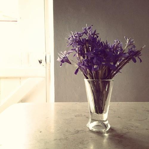 Les plus belles fleurs sont celles qui sont cueillies avec cœur.
