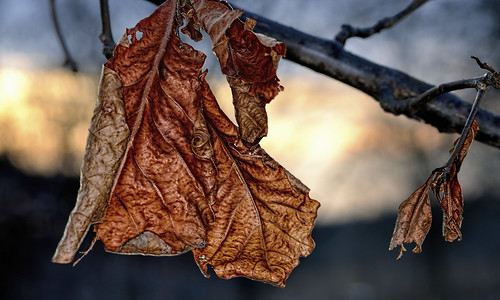 trees nature leaves illinois thegrove deadleaves sunsets macros glenview hcs tokina100mmf28atxprod clichésaturday