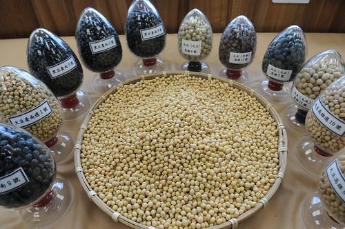 國產非基因改造黃豆 (大豆)。照片提供:農委會。