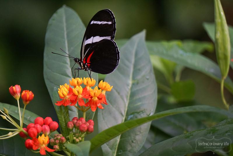 butterflies-18-wm
