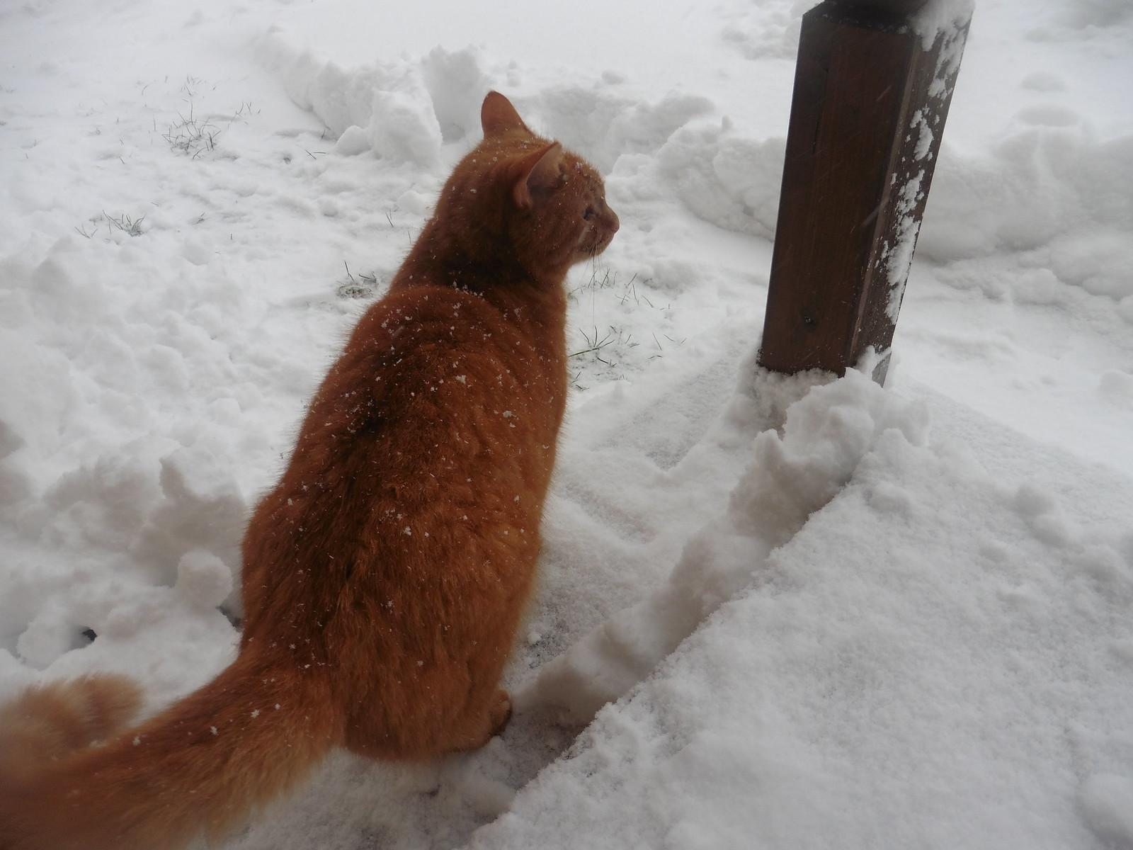 Garfield ist nicht amüsiert