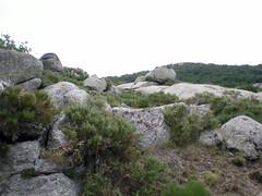 Têtes de granit