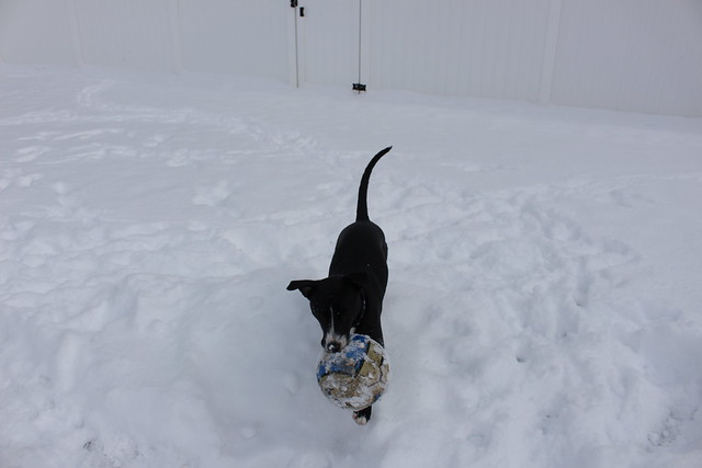 Snow Day-2/17/15