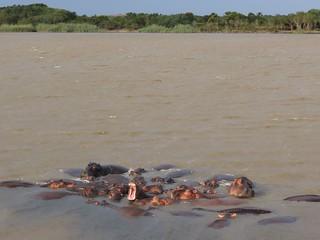 Hippo Pod, St Lucia Estuary, South Africa