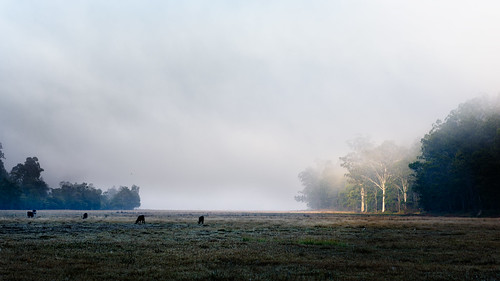 fog landscape nikon au country australia nsw newsouthwales subject 2016 landscapephotography saintalbans stalbanscommon d810 nikond810 wollombiroad mynikonlife afsnikkor24120mmf4gedvr jasonbruth