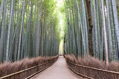 Arashiyama I