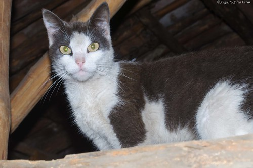 naturaleza fauna colombia florida ciudad gatos sitio valledelcauca caseteja faunadecompañía