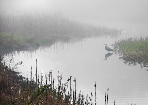 sentinel in the morning fog by enjoiskate8 via I {heart} Rhody