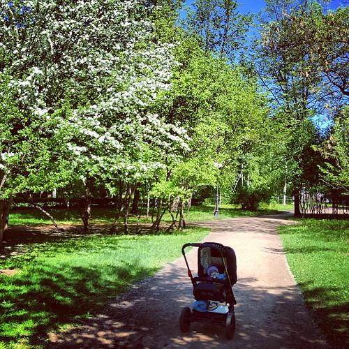 Какой же у нас красивый цветущий и зеленый город! Когда много гуляешь, видишь все иначе. #настяпутешественница