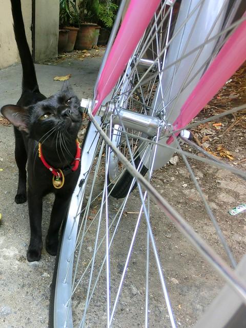Friendly black cat in Chiang Mai