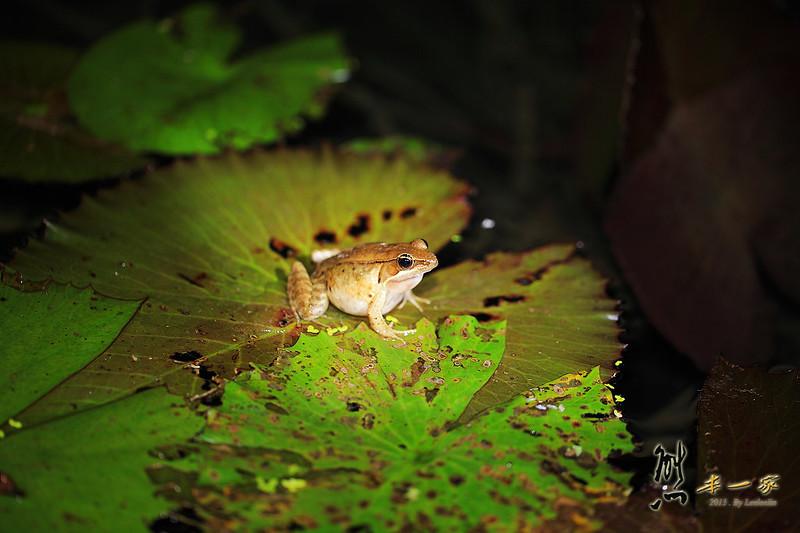 南投埔里夜間生態導覽活動|佳園渡假民宿