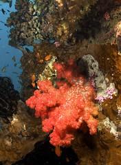 Aquatrek - Beqa dives 15 June 2013